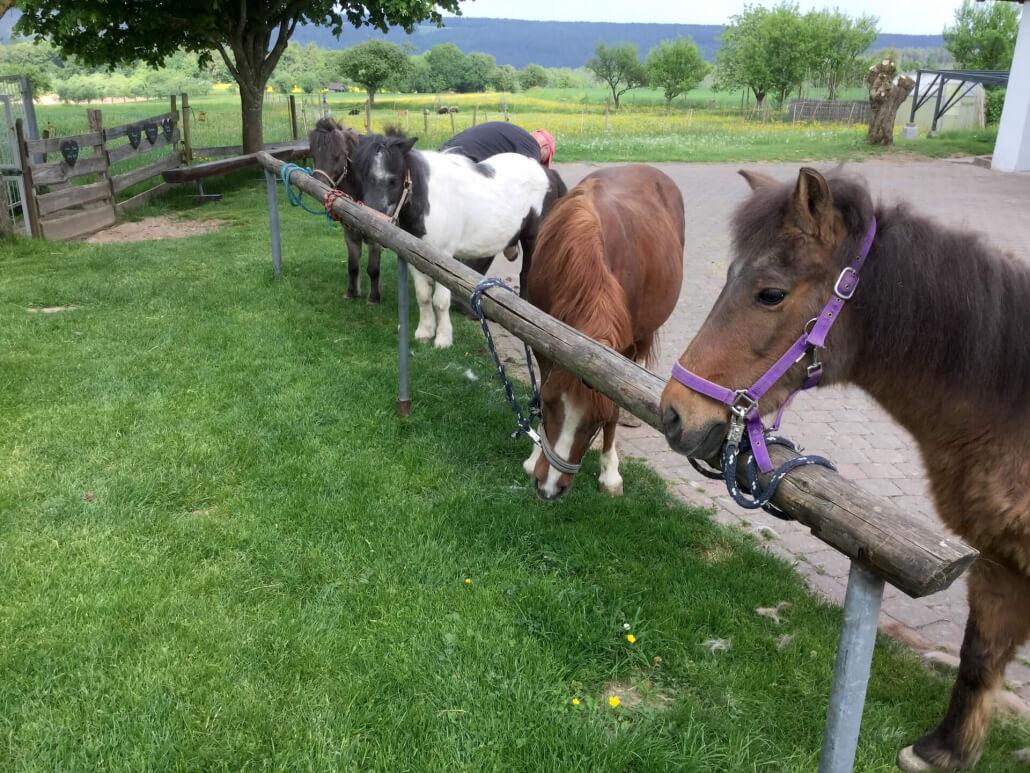 Ponyparade