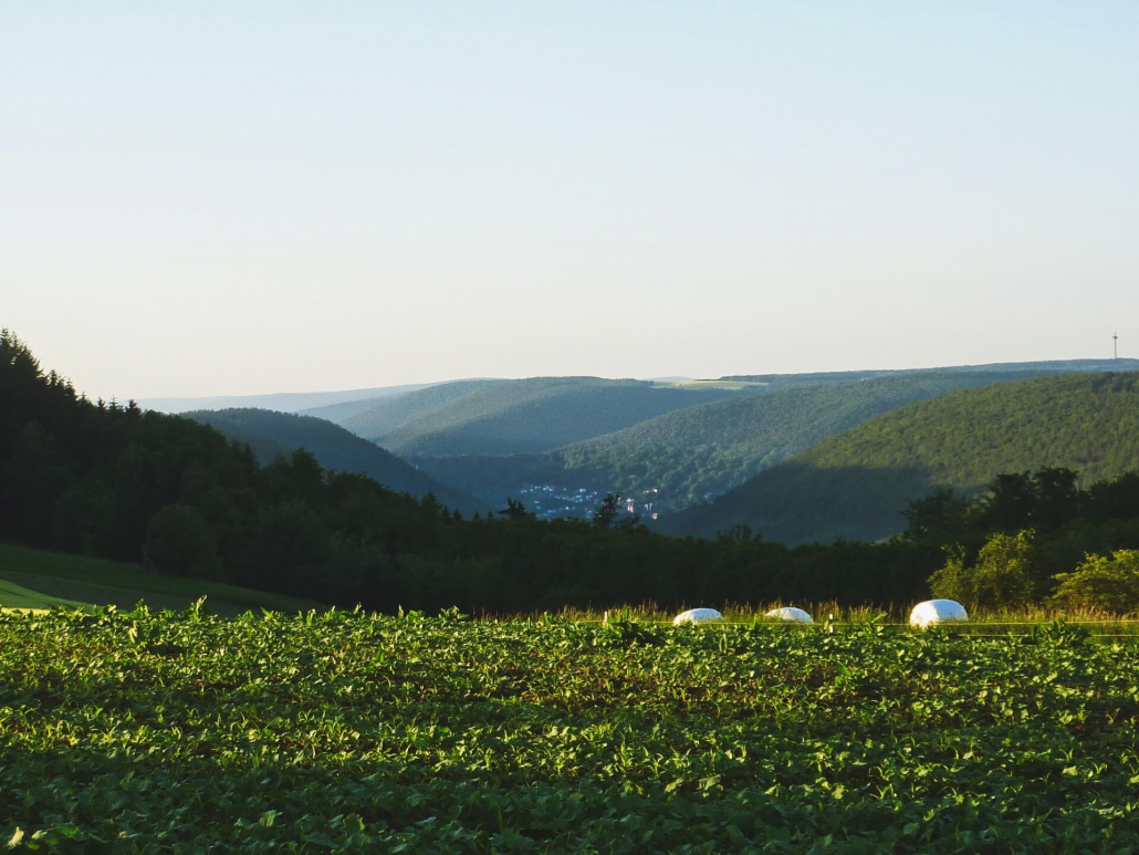 Ausblick nach Amorbach und Futtermozarella